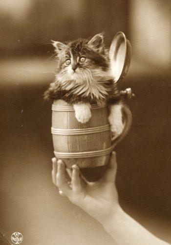 Gattino in boccale di birra. Foto cartolina d'epoca.