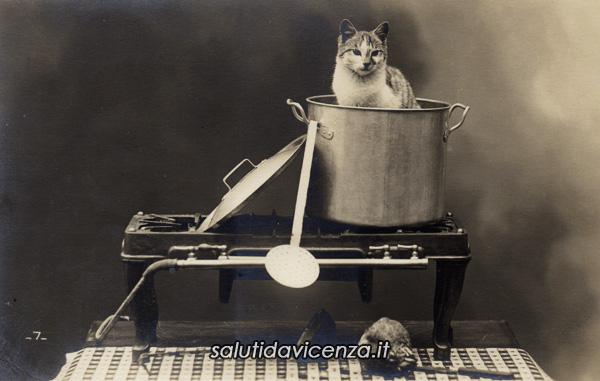 """Gato in tecia, cartolina d'epoca umoristica per ricordare il detto """"Vicentini Magnagati"""""""