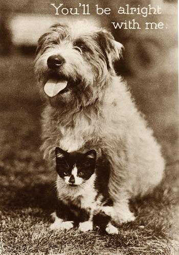 Cartolina postale cane e gatto, nemici amici