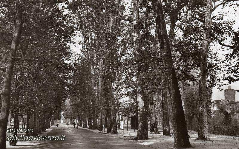 Il Viale Dalmazia o dei Platani in una cartolina anni Trenta